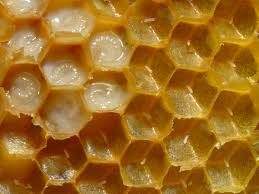 A méhpempő jótékony hatása