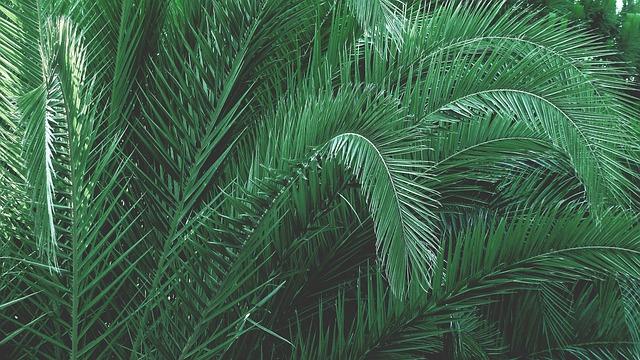 pálmafa árak